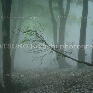 自然奏フォト名古屋創立5周年記念写真展 大阪展